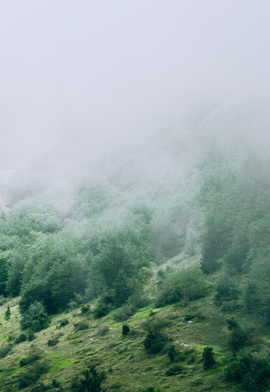Green, tree-filled hills covered with fog.